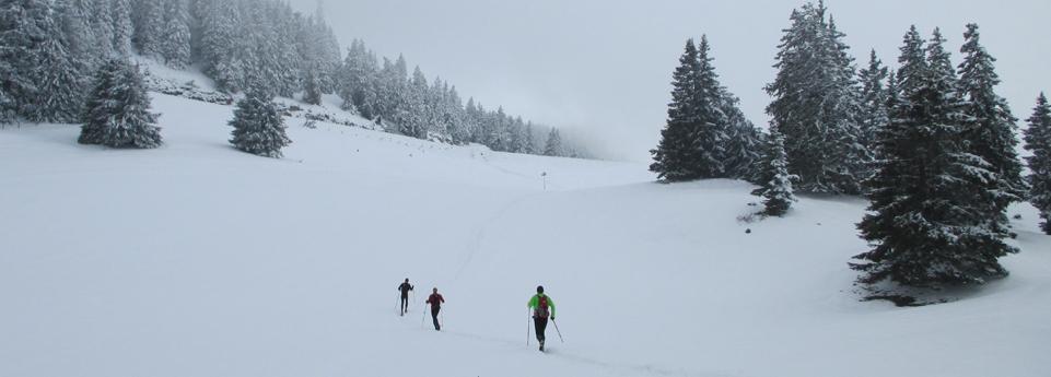 Maxi-race-off